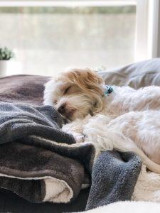 Billy The Allergic Dog | Julie's Kitchenette